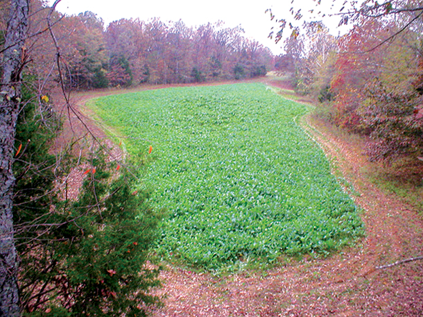 Plots Plus Wildlife Hunting Land Management Services And Solutions